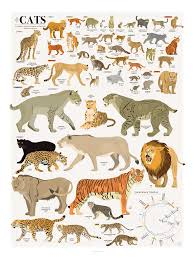 The Chart Of Cats In 2019 Cat Species Cats Animal Species