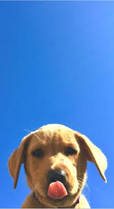 41+] Cute Dog Phone Wallpapers on ...