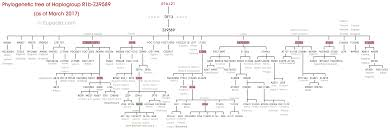 family tree dna stewart stuart royal y dna project phylogenetic tree of haplogroup r1b z39589
