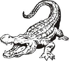 Dessin De Coloriage Alligator Imprimer Cp00773