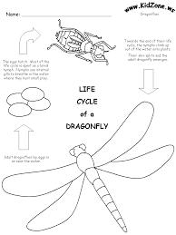 dragonflylifecycle complete and incomplete metamorphosis worksheet free worksheets on motion worksheet