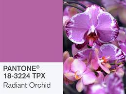 orchid purple color. Unique Purple Stock Up Pantone Selected Radiant Orchid As The 2014 Color Of  YearToday To Purple A