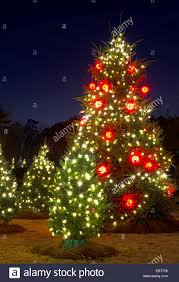 Outside Trees With Lights Outdoor Christmas Trees Have Been Decorated With Red And