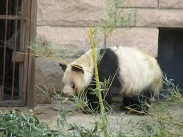 the panda garden