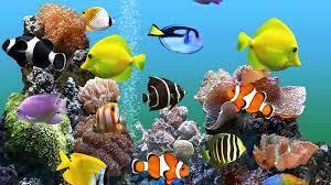 Aquarium Wallpaper on HipWallpaper ...