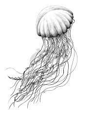 Seanettle By Missnyshadeviantartcom On At Deviantart Jellyfish