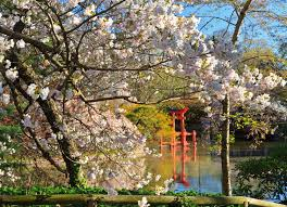 the brooklyn botanic garden is one of the most popular and beautiful destinations in all of brooklyn located downtown within walking distance of nu hotel