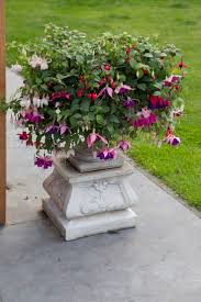 19 best Fuchsia\u0027s images on Pinterest | Garden plants, Flower and ...