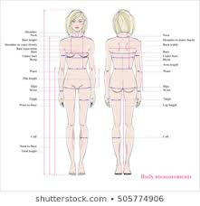Royalty Free Woman Body Measurement Chart Stock Images