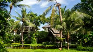 view at the garden of the anantara bophut resort spa