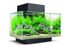 Negozio acquariologia vendita online