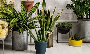 best indoor plants uk house plans