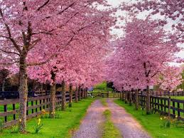 Free Spring Free Spring Wallpapers And Screensavers Wallpaper Cave