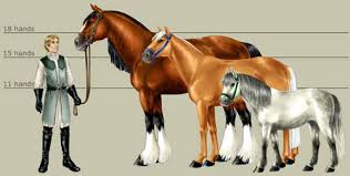 Horse Size Comparison Chart Horses A Tale Of Blood And Honour Obsidian Portal