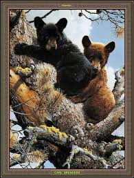 88 best carl brenders images on wildlife art animal paintings and wild animals