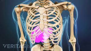 The spleen is an organ located in the upper left side of a person's abdomen. Lower Left Back Pain From Internal Organs