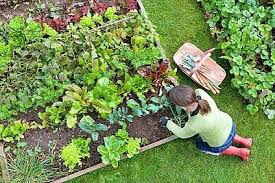 how to start a small garden. Whether How To Start A Vegetable Garden Small H