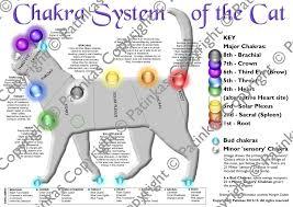 Animal Chakra Chart Animal Chakra Posters Animal Chakra Posters Animal Reiki