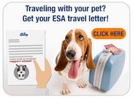 How To Get A Doctors Note For An Emotional Support Dog Online Emotional Support Animal Letters