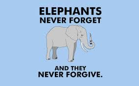 Elephants Never Forget Lol Elephants Never Forget Elephant