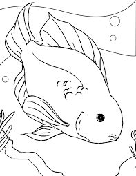 Small Picture 33 best Animals images on Pinterest Coloring sheets Draw and