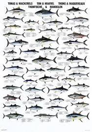 Pin By Nancybannon262 On Fishing Fish Chart Fish Tuna