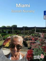 sunset nursery 48 photos nurseries gardening 11901 sw 72nd st miami fl phone number yelp