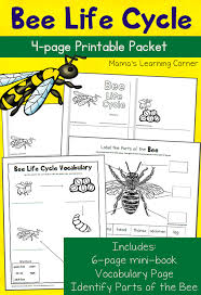Bee Life Cycle Worksheets - Mamas Learning Corner