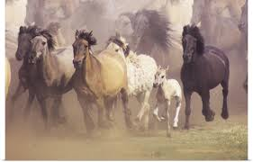 wild horses running.  Horses PosterPrintWallArtentitledWildhorsesrunning In Wild Horses Running J