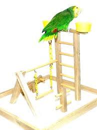 bird perch stand parrot table top stand bird perch stand parrot bird perch play gym stand bird perch