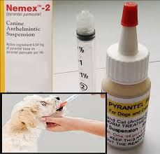 Pyrantel Pamoate Suspension Deworming For Cats And Dogs