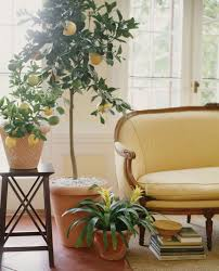 feng shui plants for office. Get To Know Your 5 Feng Shui Money Areas: The Energy Of Wealth And Abundance Can Be Expressed In Many Ways. Shows Specific Areas Home Or Plants For Office