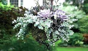 hanging plants outdoor hanging plants for shade best kinds of flowers for hanging baskets hanging plants