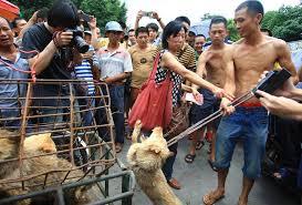 Bildergebnis für hunde kochen china