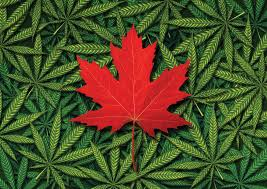 Image result for cannabis law canada