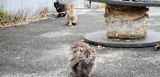 A Closer Look at Community Cats | <b>Stray Cats</b> | TNR | ASPCA