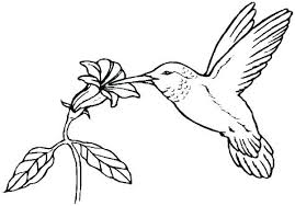 birds and blooms coloring book also birds coloring book bird coloring books bird coloring pages for