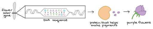 Intro To Gene Expression Central Dogma Article Khan
