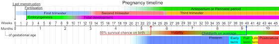 Pregnacy Clander Pregnancy Calendar Template Adoption Wiki