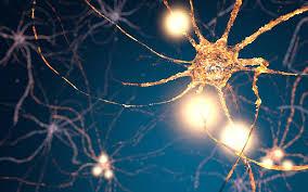 「synapse」の画像検索結果