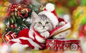 Christmas Kitten - Cats & Animals Background Wallpapers on Desktop ...