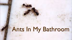 S How To Get Rid Of Tiny Ants In My Bathroom