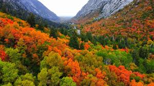 Autumn leaves changing colors in Utah