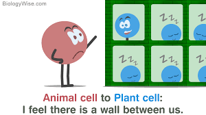 A Brief Comparison Of Plant Cell Vs Animal Cell