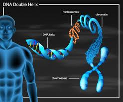 Diagrama de doble hélice de adn | Vector Gratis