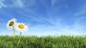 Blue sky green grass wallpapers hd wallpapers 2 Chainimage