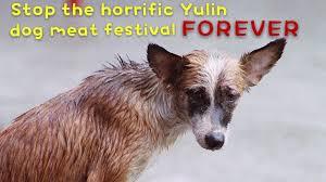 Image result for stop yulin forever