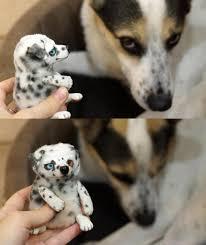 Dalmatian mini toy and my dog Balto by ...