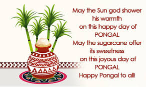 Image result for pongal images