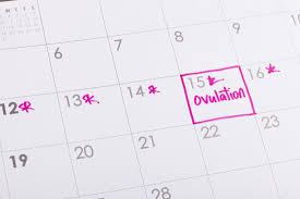 31 Day Menstrual Cycle Chart When Am I Most Fertile How To Calculate Your Ovulation Cycle